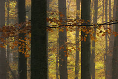 Leaves on the branches in autumn forest Stock Photography