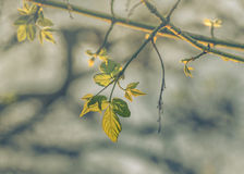 Leaves an Branches Color Edited Photo Royalty Free Stock Photography