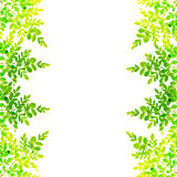 Leaves. Branches with green leaves. On a white background Stock Images
