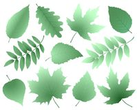 Leaves and branches silhouettes set Royalty Free Stock Photo