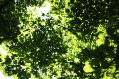 Leaves and branches Royalty Free Stock Images