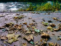 Leaves on brick by river. Fall leaves sitting on a brick river walk Royalty Free Stock Photos