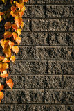 Leaves on bricks 3 Stock Image