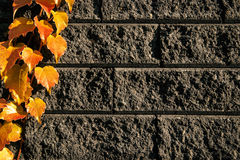 Leaves on bricks 1 Royalty Free Stock Image
