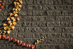 Leaves on bricks 4 Royalty Free Stock Image
