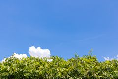 Leaves bright green at the bottom frame. Leaves bright green at the bottom of the frame and blue sky with clouds background with plenty of copy space or royalty free stock photos