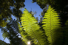 Leaves. With bright light in Sydney Royalty Free Stock Image