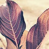 Leaves of brown. New York Nature Royalty Free Stock Photography