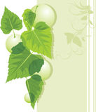 Leaves with bubbles on the decorative border Stock Images