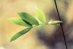 Leaves Bud Stock Image