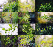 Leaves and buds collection Royalty Free Stock Photo