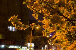 Leaves and buildings at night stock photo