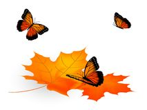 Leaves and butterflies Royalty Free Stock Photography