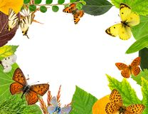 Leaves and butterflies Royalty Free Stock Images