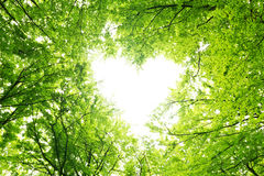 Leaves Canopy Heart Stock Photo