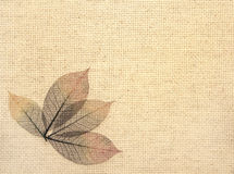 Leaves on canvas texture Royalty Free Stock Images
