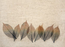 Leaves on canvas texture Stock Photos
