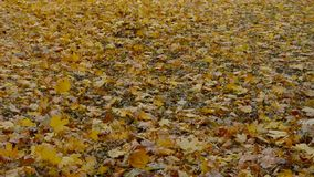 Leaves carpet dolly pan Royalty Free Stock Image