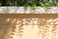 Leaves casting shadows onto garden wall Stock Images