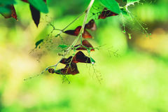 Leaves. The caterpillars eat the leaves but the the remaining portion of it can not eat Stock Photography