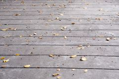 The leaves on the cement floor look natural. The leaves on the cement floor look natural, leaves fall to look beautiful royalty free stock photos