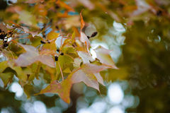 Leaves Change color Stock Photo