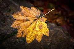Leaves Changing Color In The Fall Stock Image