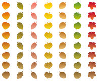 Leaves Changing Colors Autumn Brown Wither Royalty Free Stock Images