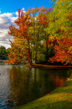 Leaves changing colors in fall. Stock Image