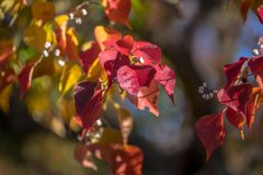 Leaves changing colors in Japan stock photography