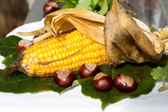 Leaves,chestnut and corn. In autumn on market Royalty Free Stock Photos