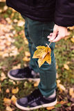 Leaves in children hand Royalty Free Stock Images