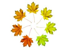 Leaves circle Stock Image