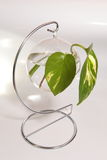 Leaves in the circle glass Royalty Free Stock Images