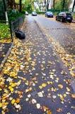 Leaves on city sidewalk Stock Photos