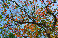 Leaves with the Clear blue sky background Royalty Free Stock Photos
