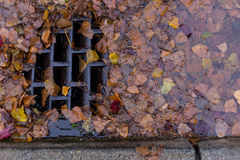 Leaves clogging a drain Stock Photo