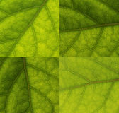 Leaves  close up Stock Photos