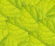 Leaves  close up Royalty Free Stock Photography