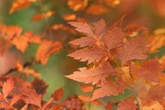 Leaves close-up. In autumn season Stock Photo