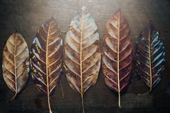 The leaves close up. Five leaves close up view Royalty Free Stock Images
