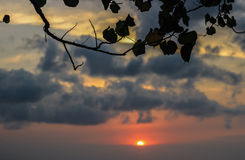 Leaves with cloudy sky behind at sunset Royalty Free Stock Images