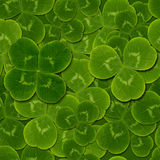 Leaves clover shamrock quatrefoil seamless pattern. St. Patrick green background royalty free stock photo