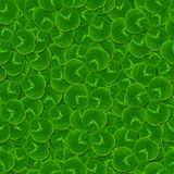 Leaves clover shamrock  seamless pattern Royalty Free Stock Photos
