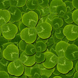 Leaves clover shamrock  seamless pattern Royalty Free Stock Photos