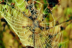 Leaves and cobweb Stock Images