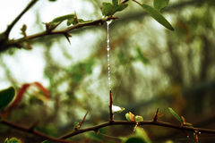 Leaves and cobweb. There are some leaves and cobweb Royalty Free Stock Photo