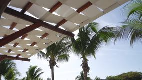 Leaves of coconut palms fluttering in the wind against blue sky. Bottom view from under awning. Bright sunny day. Riviera Maya Mexico stock video