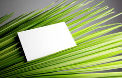 Leaves of coconut tree Stock Image