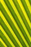 Leaves of coconut trees Royalty Free Stock Photo